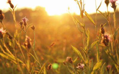 Finding Calmness Amidst Uncertainty